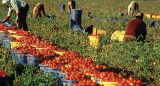 """Coldiretti Marche, arriva il """"Navigator"""" online per trovare lavoro nei campi"""