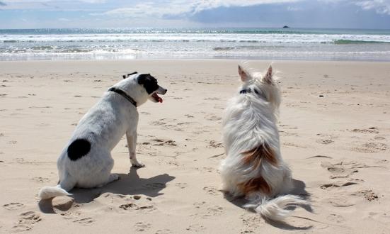 Approvata la delibera per l'istituzione della spiaggia per cani in Baia Flaminia