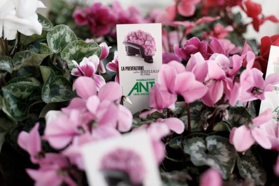 Al via domani la Campagna dei Ciclamini Solidali a sostegno dell'ANT