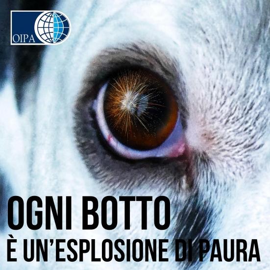 Botti di Capodanno: il decalogo dell'OIPA per proteggere cani e gatti