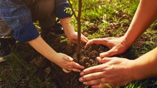Fano dedica un bosco alle vittime del covid