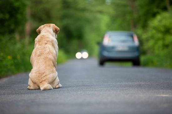 Abbandonati otto cuccioli di cane nella zona industriale di Talacchio, Ucchielli: «Mai più casi del genere»