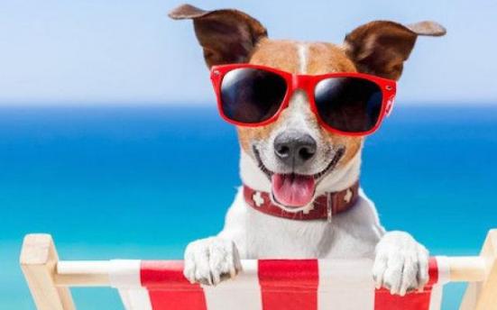 """Dopo il successo della passata stagione torna """"Abbaia Flaminia"""", spiaggia per bagnanti con cani al seguito a Pesaro"""