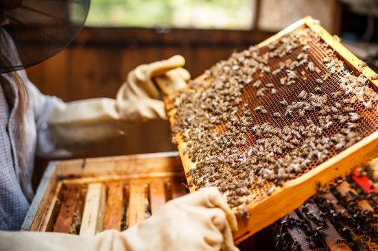 Altri 323mila euro alla Regione Marche per riqualificare il settore dell'apicoltura