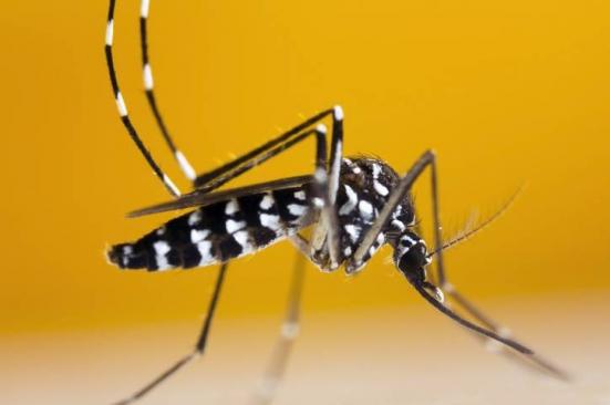 A Vallefoglia sono in corso alcune azioni di contrasto al fenomeno della zanzara tigre