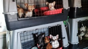 """700 cani in condizioni drammatiche in un allevamento marchigiano, """"negli ultimi giorni morti più di 30"""""""