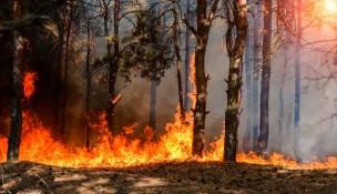 """Incendi in Sardegna nell'Oristanese, il governatore Solinas: """"Un disastro senza precedenti"""""""