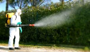 Terre Roveresche, in programma la disinfestazione contro le zanzare su tutto il territorio